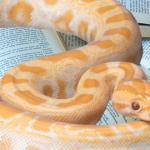 Підготовка до співбесіди на позицію Python-розробника