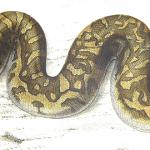 Хитрі прийоми на Python