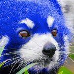 Mozilla випустила бета-версію Firefox 57 на новому движку