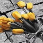Розроблений додаток, що дозволяє за допомогою нейронних мереж розфарбовувати чорно-білі фото